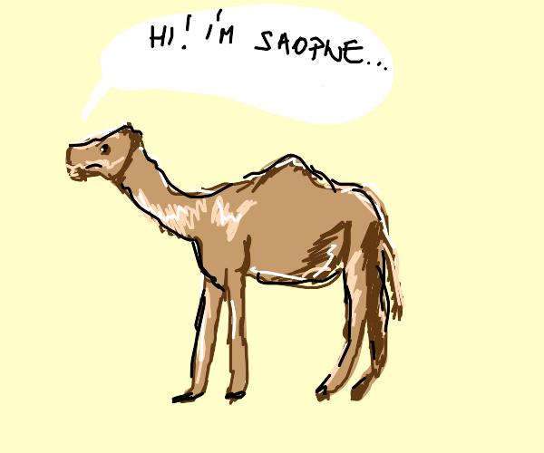 "friendly camel says ""hi, i'm saopne""."
