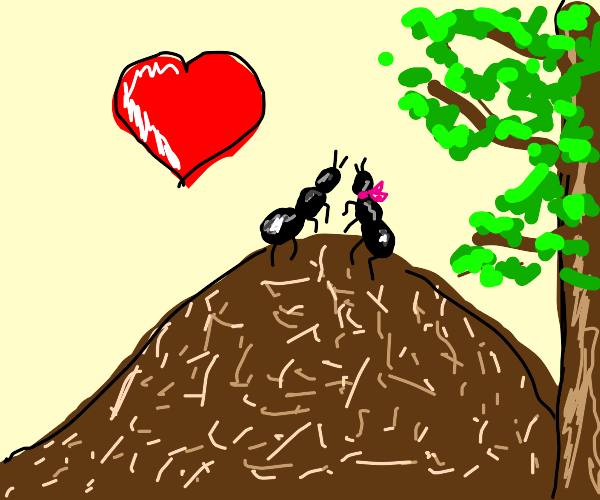 Two ants in love