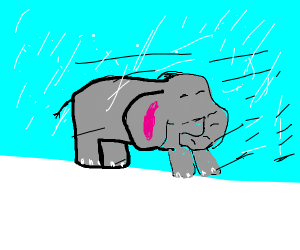 Elephant in a Blizzard