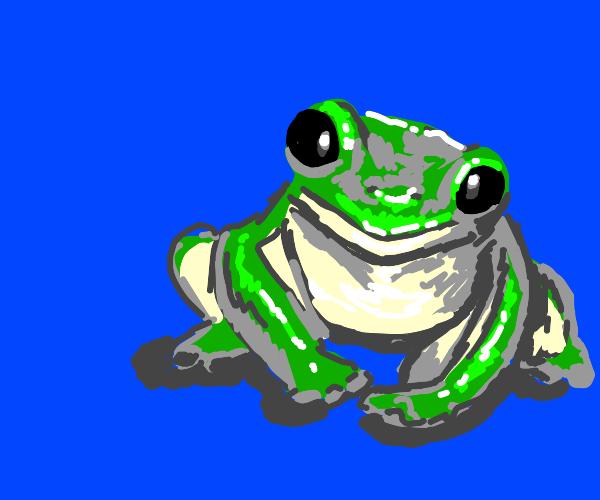 adorable frog