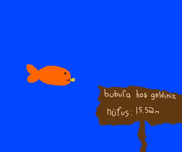 Fish eyts fish in bubul