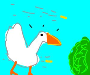 Duck retreat to the bush