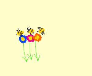 Bees love Flowers
