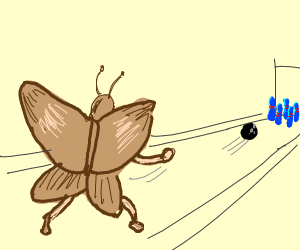 Moth is bowling