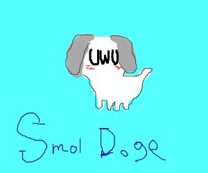 White smol dog uwu