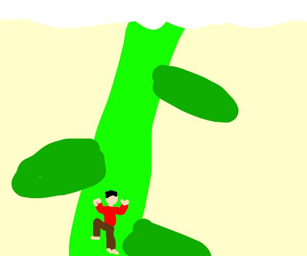 Beanstalk that reaches the clouds