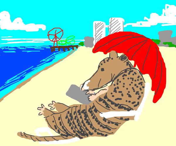 armadillo chilling under a beach umbrella