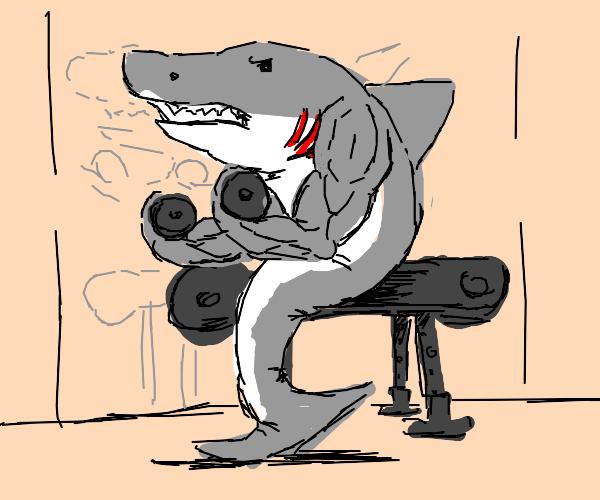 Powerful Shark
