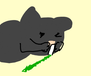 Cat sniffs catnip