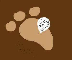 Bigfoot studying