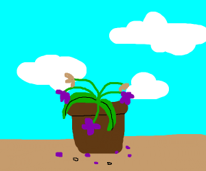 plant pot with dead purple and brown flowers