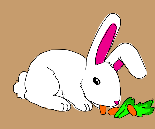 Rabbit eating carrots and lettuce