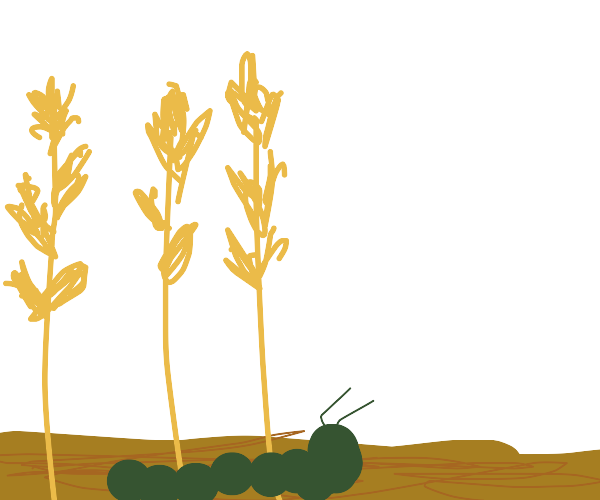Caterpillar walking through wheat