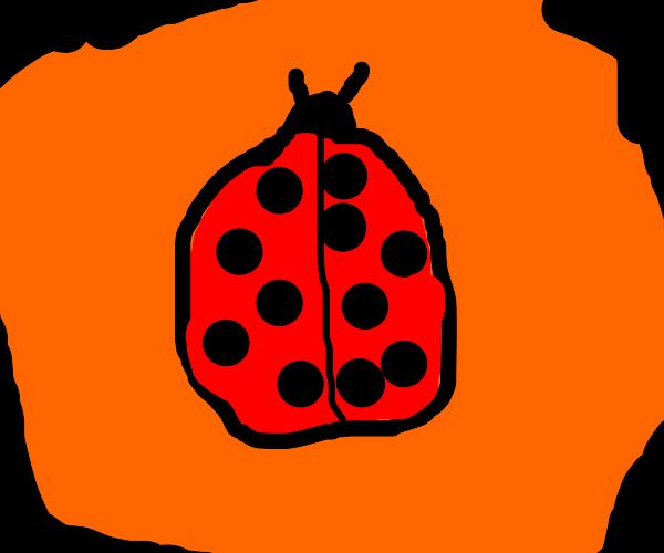 Ladybug drinks orange juice