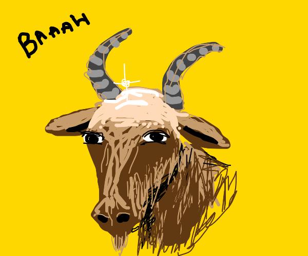 goat with shiny bold head