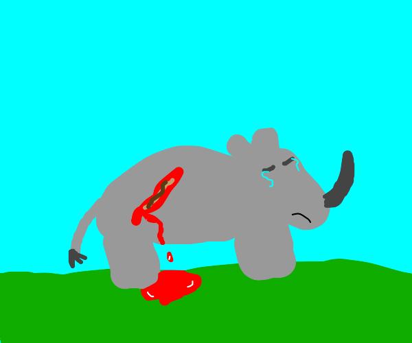 Rhino bleeds from deep cut