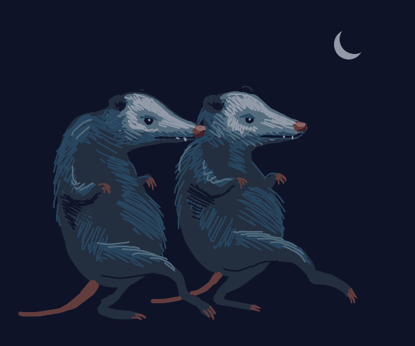 Two opossums sneaking in