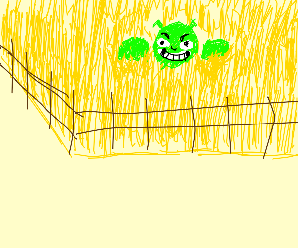 The swamp behind my farm