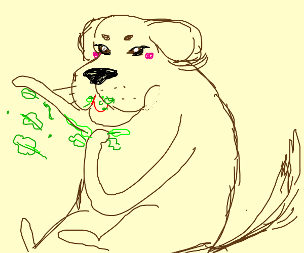 Dog eats lettuce (with his hands)