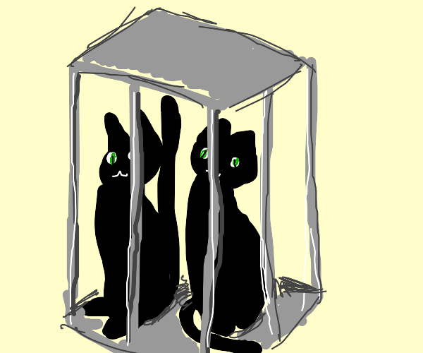 Black cats in cage
