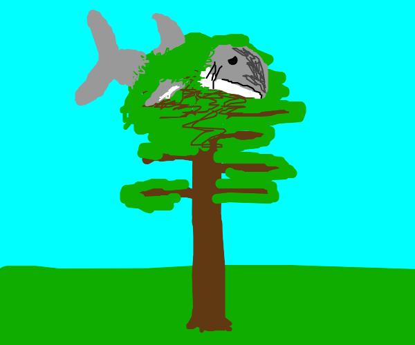 shark stuck in a pine tree