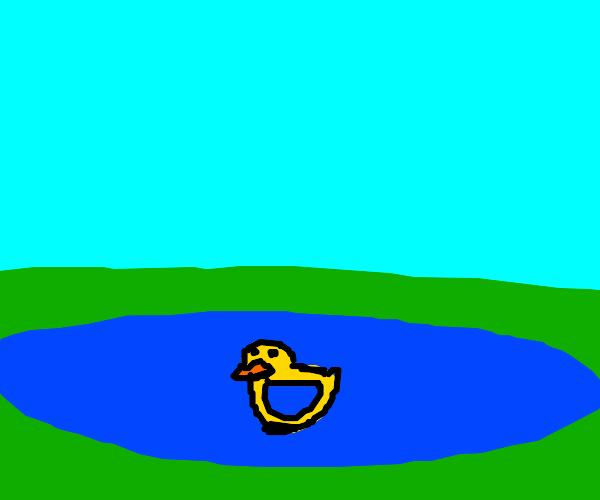 Yellow duck in the lake