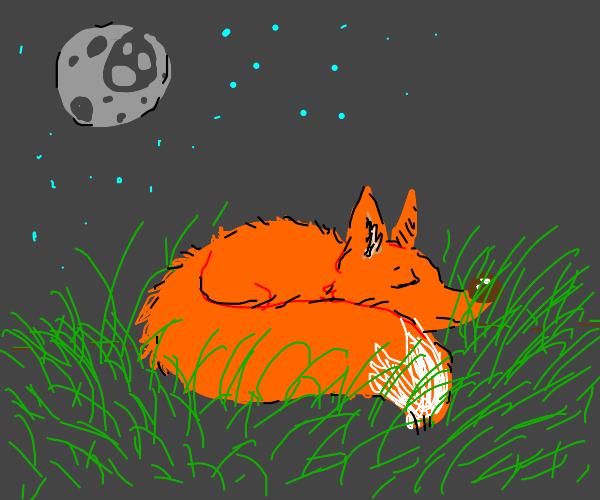 Fox sleeping, hiding its nose in grass