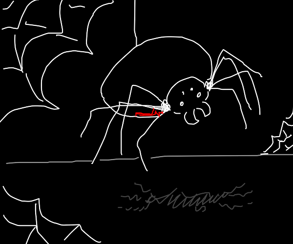 Black widow spider with shadow