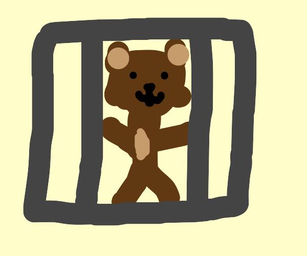 Caged Bear