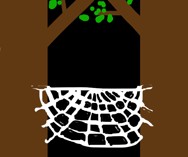 spider web in between trees