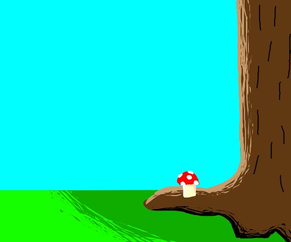 a mushroom in its natural habitat