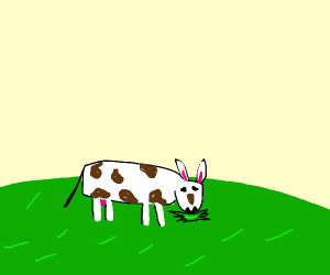 cow with bunny ears chewing grass