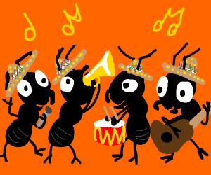 Mariachi Ants