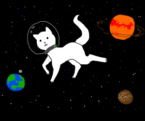lovely space cat