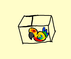 Bird trapped in a box that has no walls