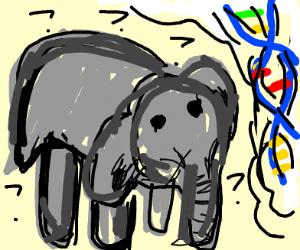 elephant questioning life