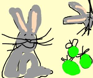Bunnies love appls