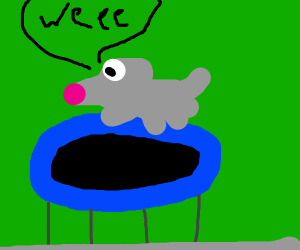 mouse plays on trampoline