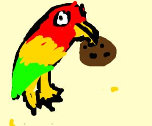 Parakeet eats a cookie