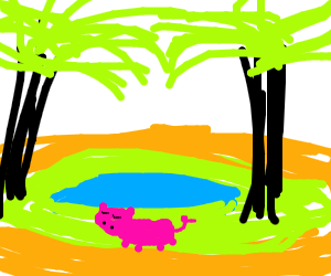 Pig napping at an oasis