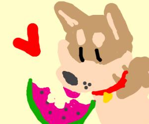 Dog Eats Watermelon