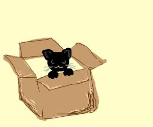 A cat in a storage box