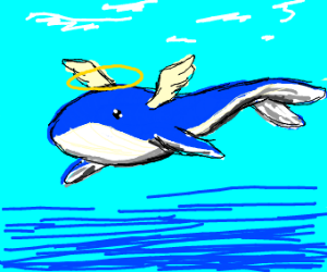 whale angel