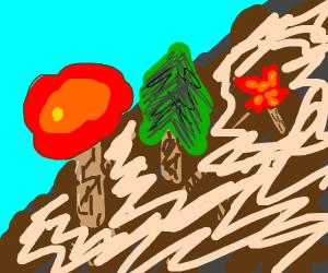 Autumn Trees on a mountain