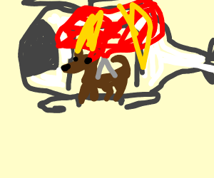 Dog in a Helicopter