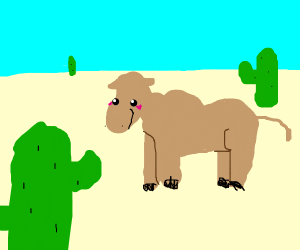 a camel happy where it lives