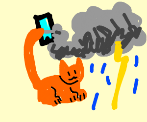 Cat holding phone with tail makes Storm