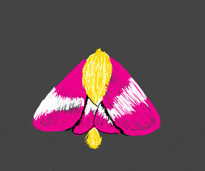 A rosy maple moth
