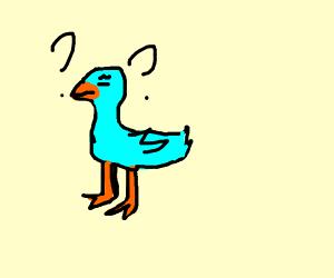 Confused blue bird