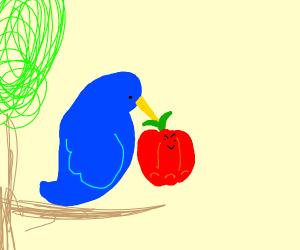 blue bird eating pepper